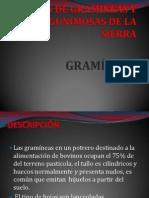 PRESENTACION DE PASTOS Y FORRAJES.pptx