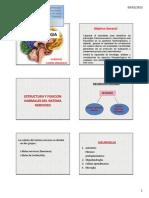 1. Morfofisiologia Del Sistema Nervioso