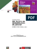 quinua-germoplasma