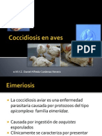 Coccidiosis en Aves Daniel Cardenas