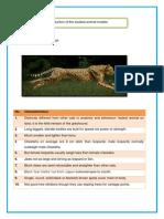 Animal Model of Cheetah