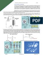 Purificacion Extraccion DNA-RNA