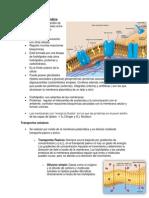 Biología - Membrana plasmática
