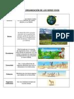 BIOLOGIA // NIVELES  DE ORGANIZACIÓN DE LOS SERES VIVOS - TIPOS  CELULARES - TRANSPORTES CELULARES - TEJIDOS Y CÉLULAS PRINCIPALES