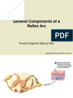 General Components of a Reflex Arc