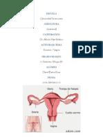 Vagina A