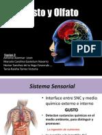 Neurociencias sobre gusto y olfato