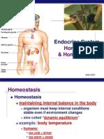 Endocrine 2008