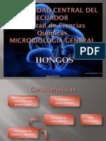 HONGOS_1