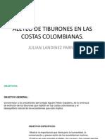 Aleteo de Tiburones en Las Costas Colombianas. Presentacion(1)
