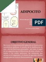 ADIPOCITO (1)