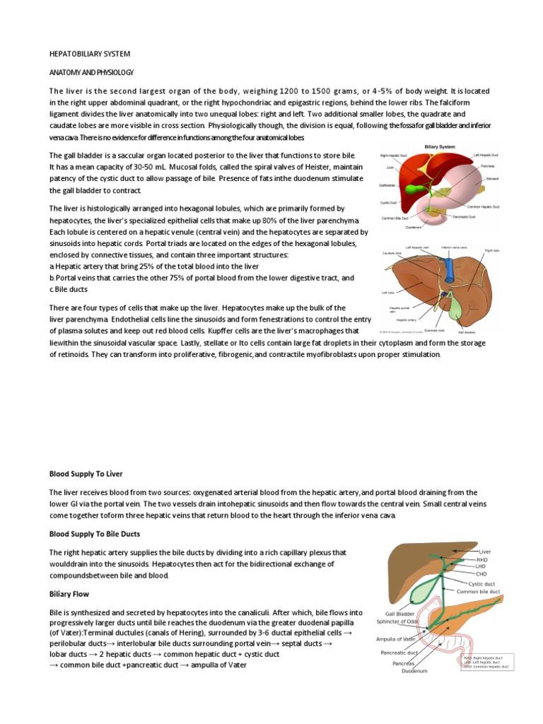 Hepatobiliary System | Liver | Anatomy