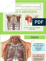 Torax Parietal1