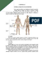 Dureri de spate mai mici in apropierea coloanei vertebrale la stanga