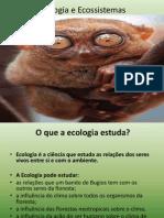 6anocap1ecap2-ecologiaeecossistemas-120213062602-phpapp02