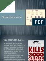 P. Ovale - Malaria