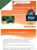 Papagaios em vias de extinção