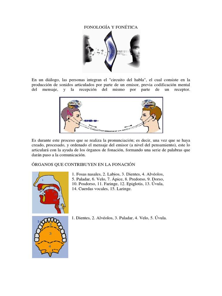 Circuito Del Habla : Fonologia y fonetica