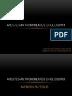 Anestesias Tronculares en El Equino (1)