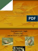 Provincia-2012-insetti