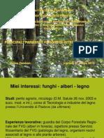 Provincia.2012 Funghi
