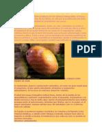 El Mango y Sus Propiedades Como Rey de Las Frutas