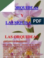 Orquideas y Ziquisapas