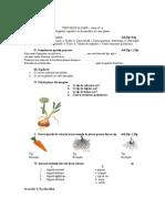 0 Eval Organele Vegetative Si de Inmultire.doc