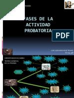 Fases de La Actividad Probatoria Mapa Conceptual Mental
