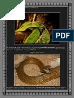 Las 5 serpientes más venenosas del mundo.docx