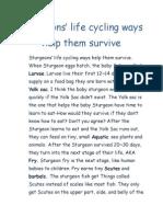 power paragraph- sturgeon life cycle