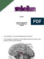 Cerebellum(Yuni)