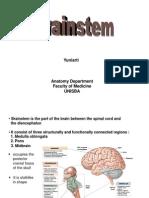 Brainstem(Yuni)
