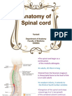 Spinal Cord for FBS