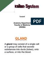 Endocrine System(Yuni)