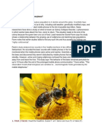 Are Cellphones Killing Honeybees