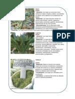 Tallos y Plantas Medicinales