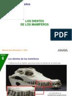 02_P_Dientes_ mamif_106.ppt