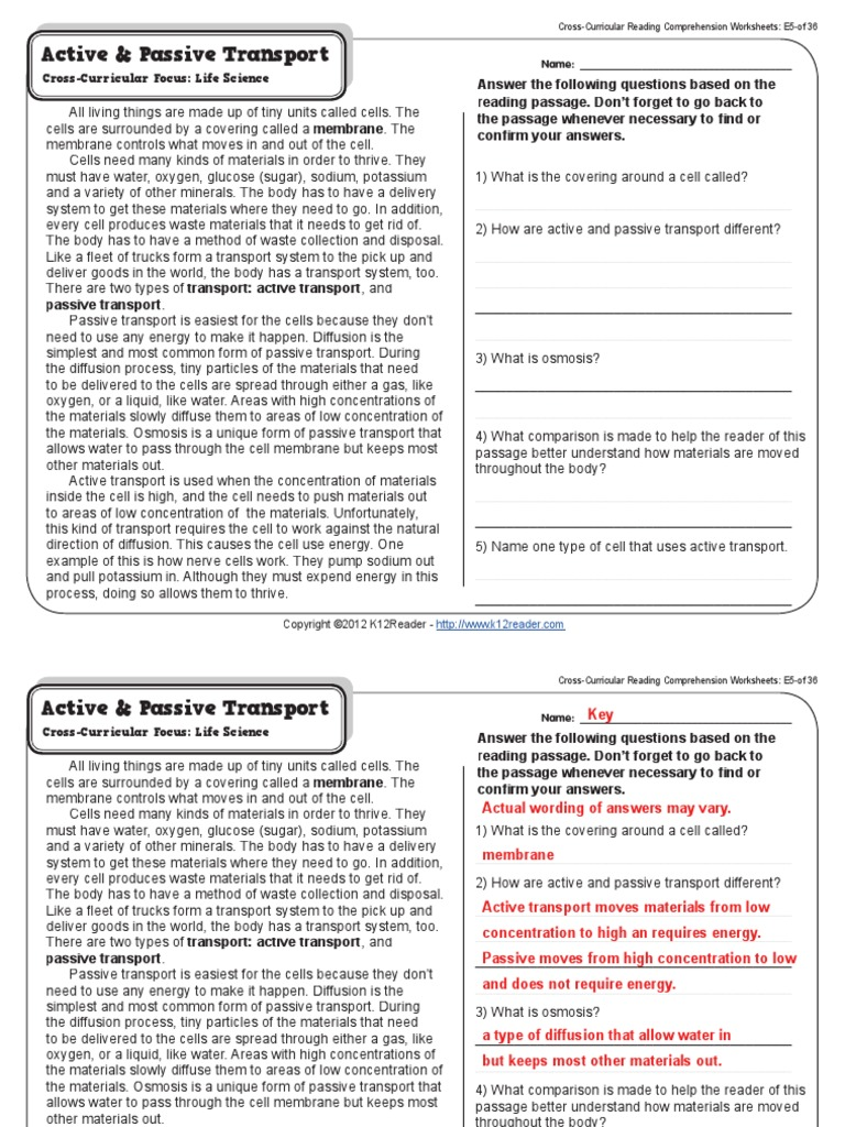 Worksheets Passive And Active Transport Worksheet active vs passive transport okl mindsprout co transport