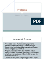 3 Protozoa