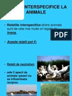 Relati i Inter Specific El a Animal e