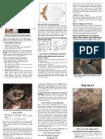 Bat Brochure