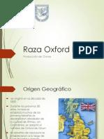 Raza Oxford Down