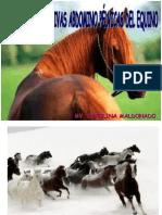 Sistema Digestivo de Equinos y Suinos. (Prof. Carolina Maldonado)
