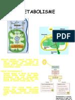 116368732-METABOLISME-ppt