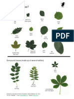 tree identification guide