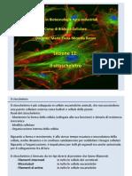 12.citoscheletro.pdf