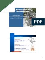Hemoglobin i Mioglobin (PMFST)