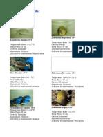 Fase 1 i 3 ( Peixos Aigua Salada ) CORREGIT