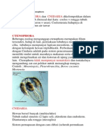 Filum Cnidaria Dan Ctenophora